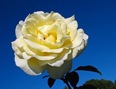 2008's Best Outdoor Floral (34)