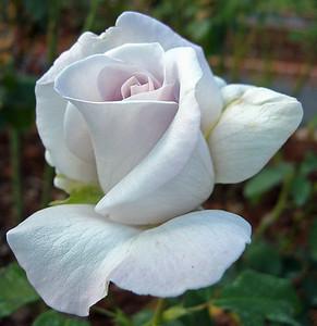 2008's Best Outdoor Floral (36)