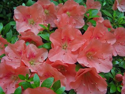 2008's Best Outdoor Floral (30)