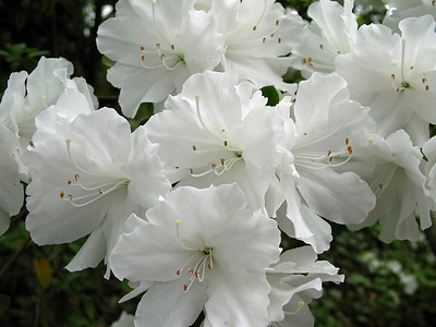 2008's Best Outdoor Floral (4)