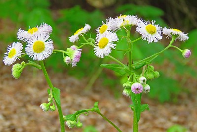 Wildflowers (1)