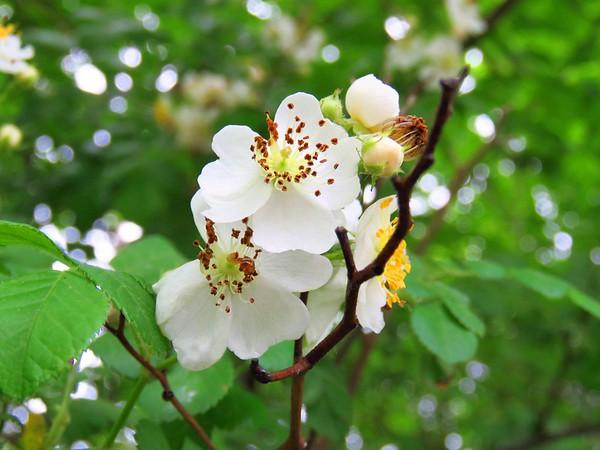 Wildflowers (4)