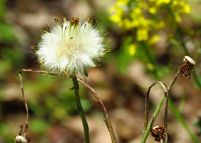 Wildflowers (6)