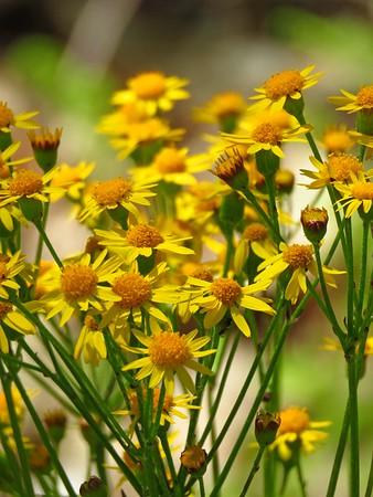Wildflowers (5)