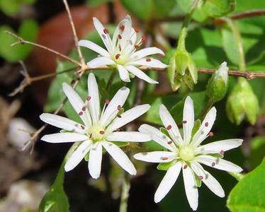 Wildflowers (8)
