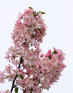 Floral Escapin' #12 (16)