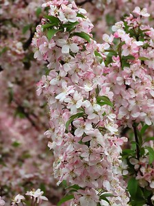 Floral Escapin' #12 (15)