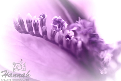 A purple monochrome macro shot of tiny white and purple flowers. Shot with the Lensbaby composer with the sweet 35 optic and the 8mm + 16mm macro converter attached.  © Copyright Hannah Pastrana Prieto