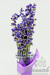 A close-up of cut Grosso Lavender