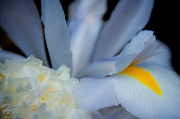 Delicate Luminous Orchid   © Copyright Hannah Pastrana Prieto