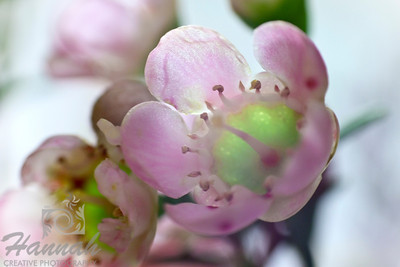 A macro shot of tiny pink flowers. Shot with the Lensbaby composer with the sweet 35 optic and the 8mm + 16mm macro converter attached.  © Copyright Hannah Pastrana Prieto