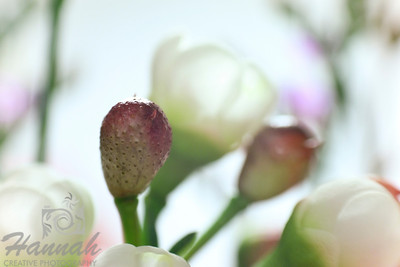 A macro shot of tiny flower buds and tiny white flowers. Shot with the Lensbaby composer with the sweet 35 optic and the 8mm + 16mm macro converter attached.  © Copyright Hannah Pastrana Prieto