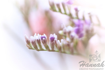A macro shot of tiny white and purple flowers. Shot with the Lensbaby composer with the sweet 35 optic and the 8mm + 16mm macro converter attached.  © Copyright Hannah Pastrana Prieto