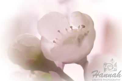 A macro shot of tiny white flowers. Shot with the Lensbaby composer with the sweet 35 optic and the 8mm + 16mm macro converter attached.  © Copyright Hannah Pastrana Prieto