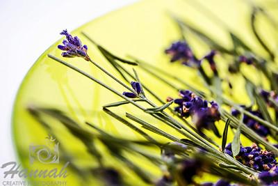 A macro shot of cut English Lavender