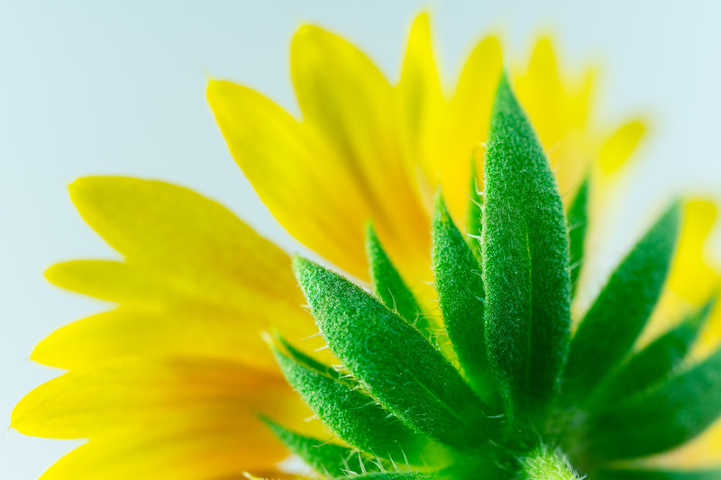Mellow Yellow Bloom