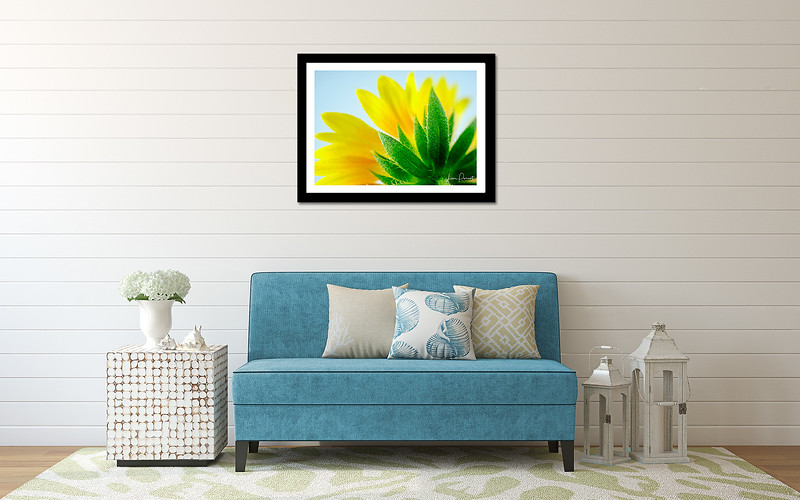 20 X 30 framed print of Bloom Bottoms Yellow Butt