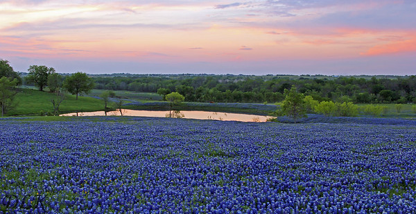 Bluebonnets Pond Sunset