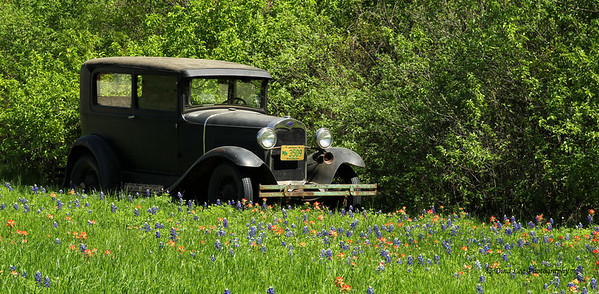 Old Truck in Bluebonnets