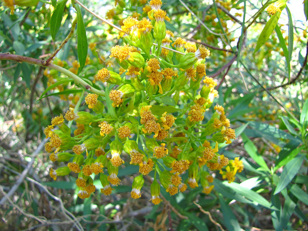 Desert Blooms (12)