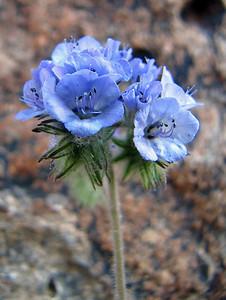 Desert Blooms (2)