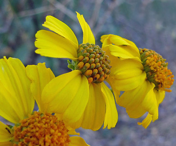 Desert Blooms (5)