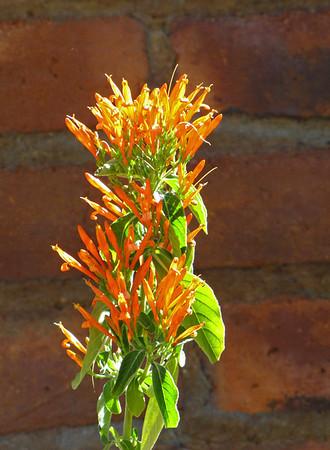 Desert Blooms (18)
