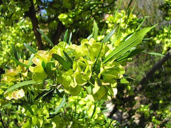 Desert Blooms (17)