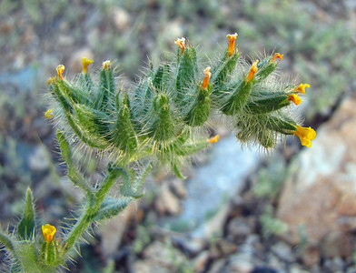 Desert Blooms (6)