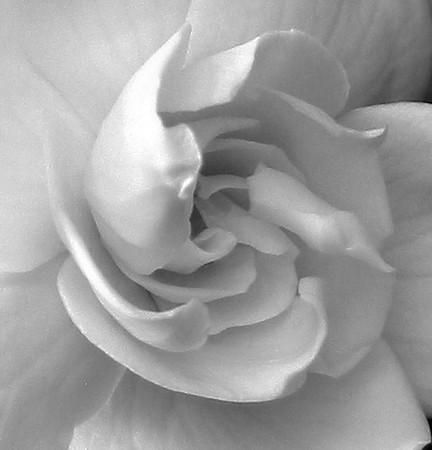 Gardenia (7)