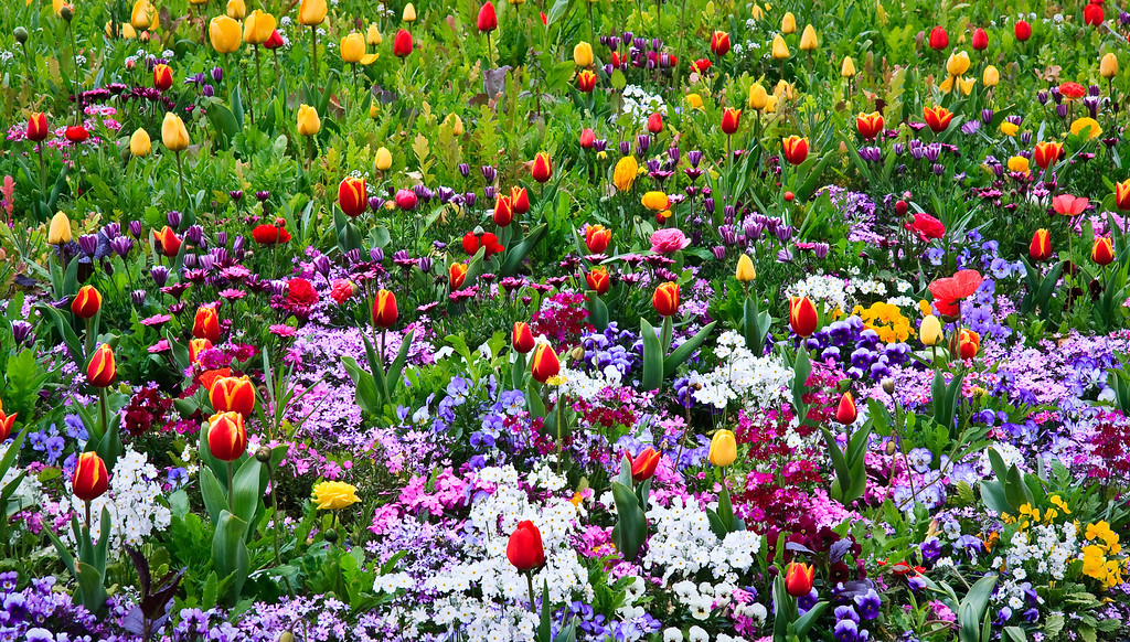 Warm Spring. Spring flowers and bulbs bloom in profusion, with a strong emphasis on various shades of green, purple, yellow, white and orangy red.
