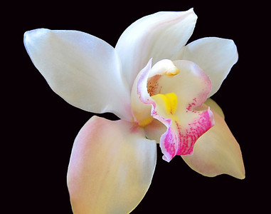 Orchid (47)