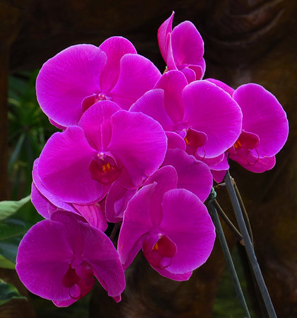 Orchid (53)
