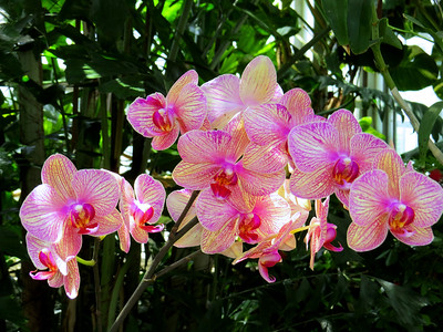 Orchid (60)