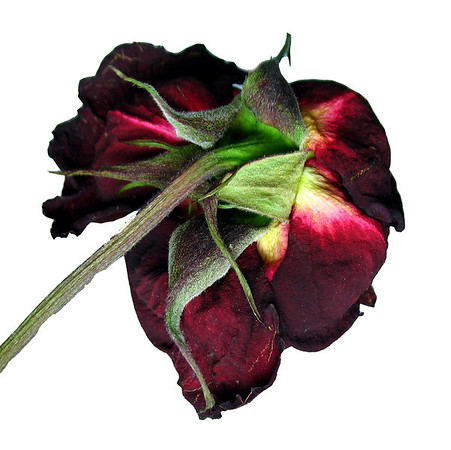 Red Floral (Dried Rose) 3