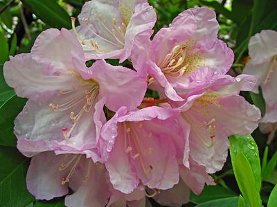 Memphis Botanical Garden in Memphis, Tennessee (4)