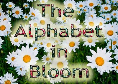 The Alphabet in Bloom