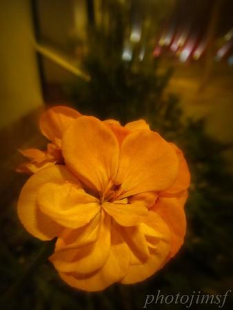 7-20-12 Pan Dulce 269 Eros flower wm
