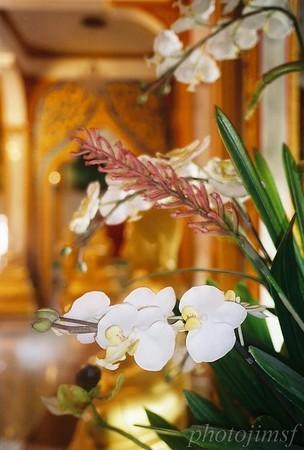 james98-R4-013-5 Phom temple orchid wm