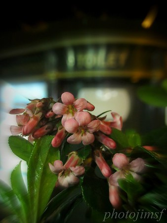 7-20-12 Pan Dulce 240 Toilet Flowers Market and Castro adj wm