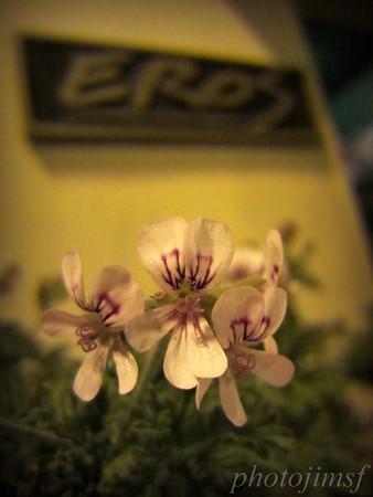 7-20-12 Pan Dulce 261 eros flowers adj wm