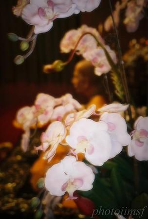 james98-R4-035-16 budhha orchid adj wm