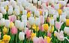 Colorful Cuties ... :-) ;) @ Atlanta Botanical Garden - Atlanta , Georgia - USA