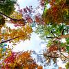 Fall color across White water creek hiking trail of Chattahoochee - Atlanta, Georgia - USA