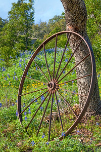 Wheel and flowers