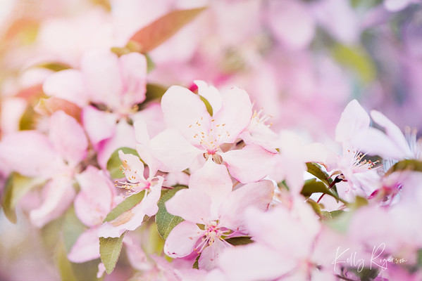 Spring has arrived and with some recent rain storms, the blossoms have just really taken off in full force!