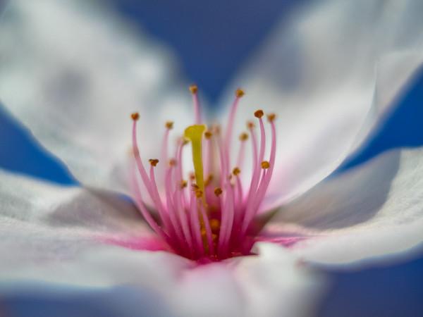 Fleeting Blossom