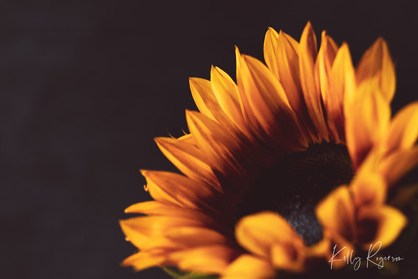 You know autumn is on its way in when the sunflowers are out for the last bit of summer.