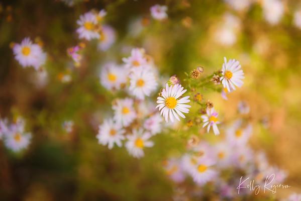 Spring Life Into Autumn