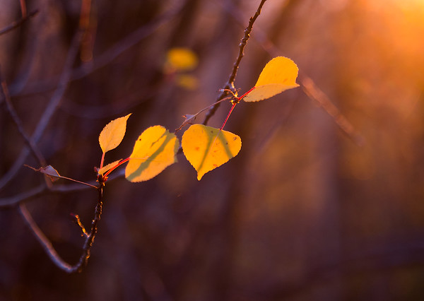 Amber Autumn Light